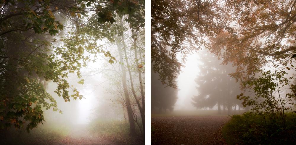 Fog-Nadine_Mojado_1