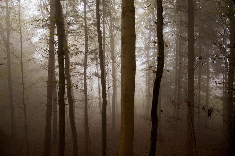Fog-Nadine_Mojado_2