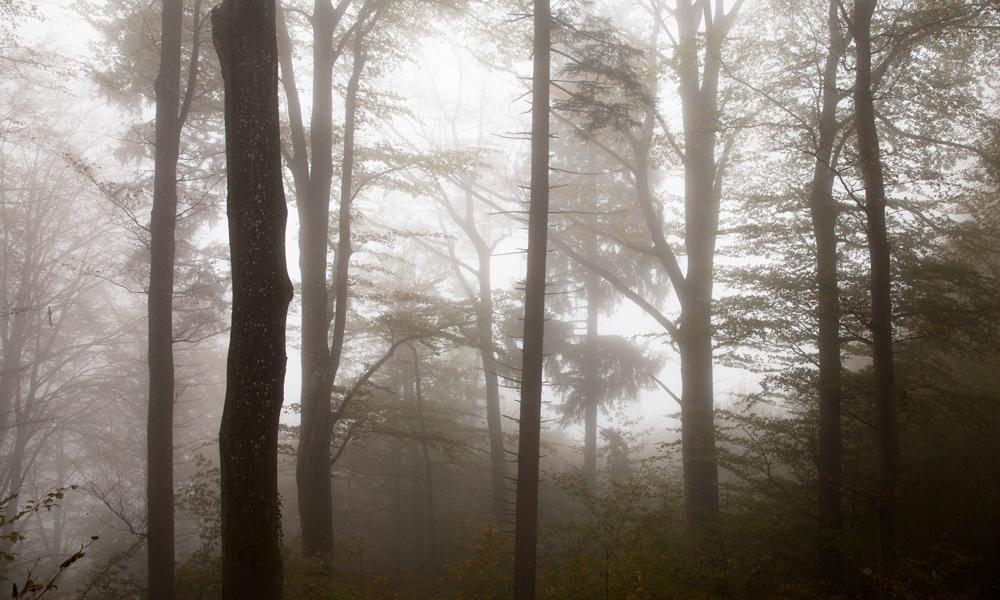 Fog-Nadine_Mojado_4