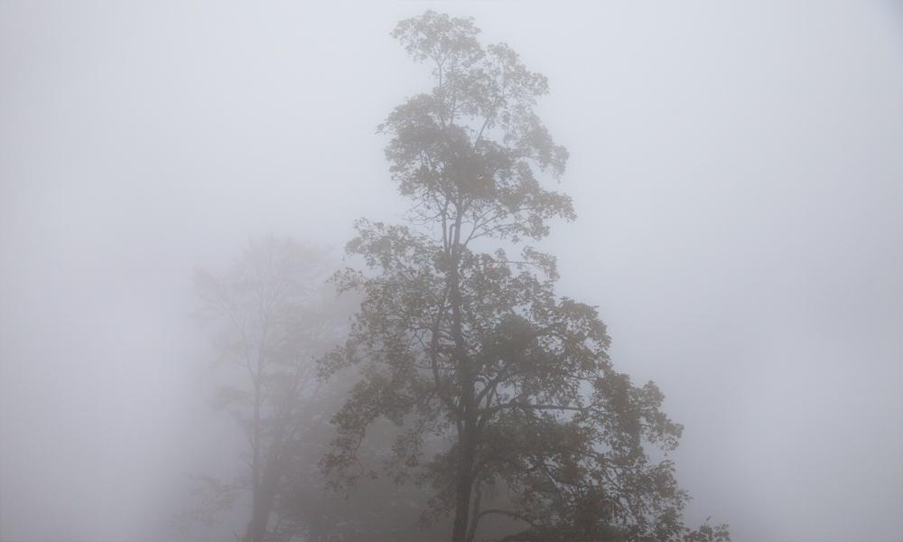 Fog-Nadine_Mojado_7